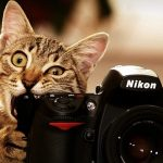 کاربرد عکاسی در گرافیک