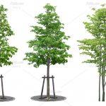 طرح باز انواع درخت ، بوته و چمن
