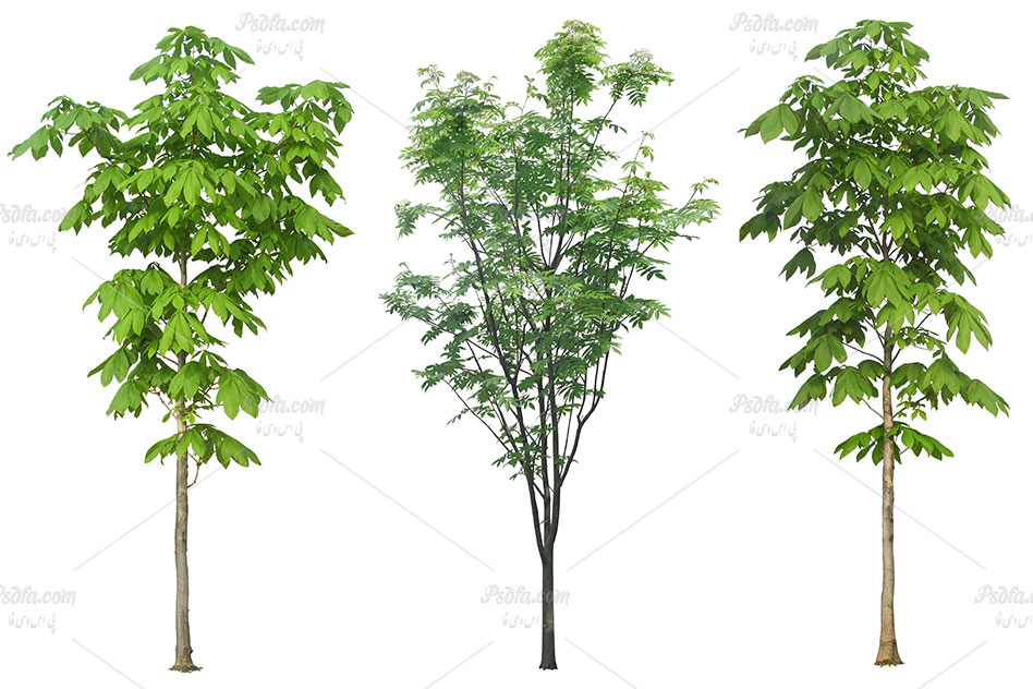 لایه باز انواع درخت ، بوته و چمن